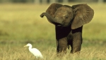 baby-elephant-in-field